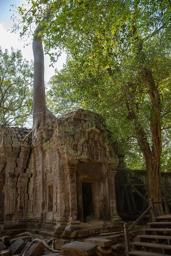 Ta Prohm (Tomb Raider) temple.  April 3, 2019