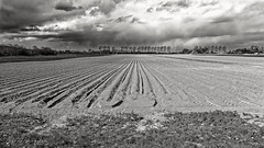 Lines (Alfred Grupstra) Tags: agriculture ruralscene nature field farm blackandwhite land plowedfield dirt landscaped landscape outdoors lightingtechnique summer plant europe sky cultivated growth nopeople