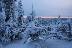 Snow Covered Trees (T.Riemer) Tags: winter snow finland koli national park schnee weis white tree sunset evening nature