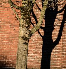 Winter Sunshine. (Omygodtom) Tags: winter shadow tree street bright sunshine alien urbunnature d7100 odd strange usgs art abstract portrait