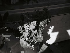 Gum $15 (Matthew Paul Argall) Tags: ansco50 fixedfocus 110 110film subminiaturefilm lomographyfilm 100isofilm blackandwhite blackandwhitefilm plasticlens toycamera