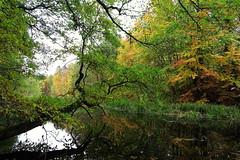 Stromtal (Evan_1980) Tags: uckermark boitzenburg tiergarten strom wald herbst