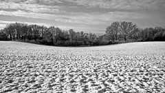 ...ohne Farbe (dl1ydn) Tags: dl1ydn landscape altglas konica 28mmf35 hexanonar manual manuell landschaft winter schleswigholstein bw 28mm wide