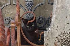 Hide and seek (Rob Oo) Tags: lisbon portugal ccby40 cemiteriodosprazeres lisboa lissabon ro016b hideandseek hff cat inexplore ccby
