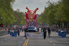 Cherry Blossom Parade (Valley Imagery) Tags: cherry blossom parade 2019 washington dc color marching music display military band drums pig japan sony a99ii 70400gii