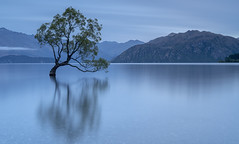 Out of place (David Feuerhelm) Tags: landscape water lake nikkor colour serene dream longexposure slowwater tree mountain reflection blue sky wanaka thatwanakatree centralotago southisland newzealand nature ndfilters leebigstopper nikon d750 2470mmf28 aoi elitegalleryaoi bestcapturesaoi