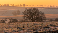 early morning (Misch el) Tags: sunrise sunset travel trees tree grass rural frozen sun colour canon eos 5d4 5dmark4 europe luxembourg field countryside sky moody smooth warm beautiful beauty