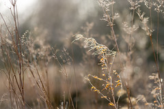 Silver dawn (tonguedevil) Tags: landscape outdoor outside view countryside winter nature field woodland plants flowers sunlight shadows light morning colour