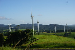 Ravenshoe_20190216_0030 (O En) Tags: wind turbines ravenshoe cows
