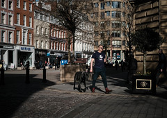 Dove & Dog. (BDeye Images) Tags: manchester 2019 stannssquare february greatdane dog dove
