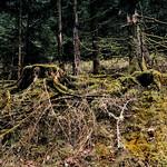 Im Bergwald bei Schönmünzach thumbnail