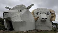 Corrugated iron sheep, Tirau, New Zealand (steverh) Tags: sheep corrugatediron tirau newzealand