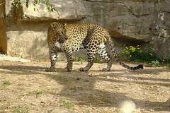 _DSF3898 Terra natura (Pascual Mateo) Tags: tierra natura xt3 fujifilm fujinon 50230 fauna animal naturaleza