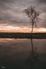 Tree (Osieccy Fotografia) Tags: tree water sunset landscape poland clouds sky outside pentax