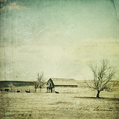 i really need to fix the door (jssteak) Tags: canon rural colorado farm barn cows aged vintage textured tree horizon