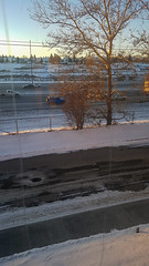 Early Winter Evening (Bracus Triticum) Tags: early winter evening 12月 december 2018 平成30年 じゅうにがつ 十二月 jūnigatsu 師走 shiwasu priestsrun calgary カルガリー アルバータ州 alberta canada カナダ