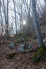 Hike to Mont Baret (*_*) Tags: mountain nature hiking montagne randonnée trail marche walk afternoon march spring printemps 2019 sunny europe france hautesavoie 74 annecy savoie montbaret bornes forest