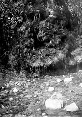 Pedres i regalims / Heaps of stone (SBA73) Tags: plate dryplate gelatinobromuro gelatinobromure gelatinobromur jasonlane jlanedryplate hc110 9x12 lf largeformat ancient old vintage bw alternativephotography filmisnotdead filmisalive filmphotography traydevelopment rec riera stream nature colobrers sabadell vallèsoccidental longexposition german alemana regalims heaps stones ernemann heag heagi