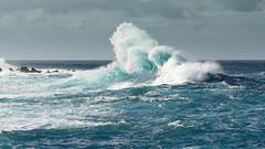 Porto Moniz Surf 2 (Gene Mordaunt) Tags: portugal madeira portomoniz surf water ocean nikon810 seascape sea waves atlantic