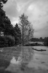 EPMG Duddingston Dr Neil's Garden April 2019-12 (Philip Gillespie) Tags: epmg edinburgh photography meetup group duddingston dr neils gardens plants flowers blooms bushes trees forest spring seasons daffodil reflections window canon 5dsr park nature outside outdoors water wet rain clouds leaves pond lake loch colour color blackandwhite black white yellow orange purple blue green pink blossom sky hills grass lilly mono monochrome abstract natural view landscape drops light shadow sun sunlight