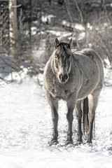la Grise (passion photos animalières) Tags: cheval horse hiver winter
