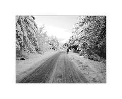 Snow walk (Franco & Lia) Tags: street fotografiadistrada photographiederue strasenfotografie limbara montelimbara tempiopausania tempio sardegna sardinia biancoenero blackandwhite noiretblanc schwarzundweiss neve snow passeggiata walk