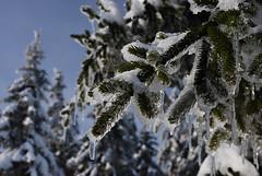 Ice❄️ (RalleRambo77) Tags: eis ice ast winter