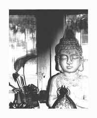 (teddybear--11) Tags: window inside outside snow clouds january tulsa oklahoma still shot shadow contrast blackandwhite bw face plant leaf buddha statue