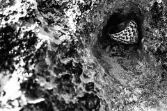 Shells have their own treasures (Amr Tawwab) Tags: shell sea sand coast beach beautiful sunny sunshine black blackwhite blackandwhite white bw focus focused closeup compose contrast hidden treasure hide clarity rocks stone cave lens eye canon mine own lonely alone separate