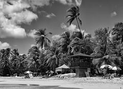 _IGP7608f (bertrand.garrigou) Tags: beach plage martinique sea ocean lifeguard sand palmiers sable pentax pentaxart k3