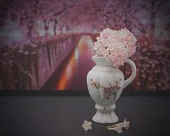 Sakura (tanyalinskey) Tags: sakura flower blossom cherryblossom miniature jug madeinjapan flickrfriday