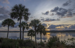 """Sunrise at """"The Villages"""".... (Kevin Povenz) Tags: february 2019 kevinpovenz florida orlando thevillages villages palmtrees sunrise early earlymorning morning morningsky clouds sky outside outdoors shoreline lake water reflection lakesumpter canon7dmarkii sigma blue"""