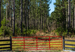 The Red Gate (Jim Frazier) Tags: 201801floridatrip 2019 avenue beatenpath bluesky callahan country fence fl flora florida footpath forests gates green january jimfraziercom landscape lanes leadinglines metal nature passage pastoral path paths pathways pines plants q3 red roadtrip roads roadside route rural scenery scenic steel street sunny toexport track trails trees vacation verticallines verticals walkways winter woodlands woodlots woods