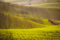 Green waves (PhotoVision by Pavel Rezac) Tags: agriculture autumn background beautiful chapel countryside cultivation czech environment europe famousplace farm farmland field fields grass green harvestfield hill hills hillside landscape light line lines meadow moravia natural nature plant republic rural scenery seeds shadows spring stripe stunning summer sunny sunrise sunset trees tuscany view wave waves wildlife wine yellow nenkovice southmoravianregion czechrepublic cz