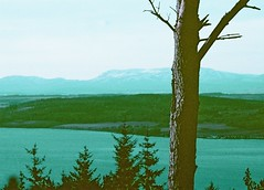 View from Craig Phadrig, Inverness, March 2016 (Mano Green) Tags: tree mountain beauly firth sea sky water winter march 2016 lomochrome purple nature 35mm film canon eos 300 70300mm lens landscape colour surreal coast