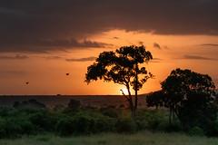 Another Beautiful Sunrise (helenehoffman) Tags: africa kenya landscape maasaimaranationalreserve orange sunrise