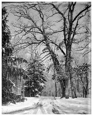 Winter Scene (Larry Buechler) Tags: dryplate largeformat crowngraphic analogue jlane woods woodland snow winter landscape trees
