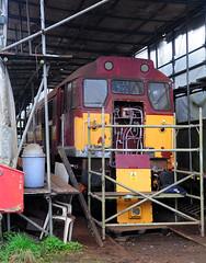 31466. (curly42) Tags: 31466 class31 brushtype2 dfr railway preserveddieselloco deanforestrailway lydneyjunction