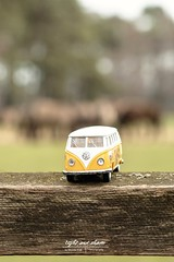 Fridolin Bulli bei den Wildpferden (Light and shade by Monika) Tags: wildpferd münsterland horse motiv fridolinbulli wildlife
