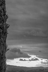 Cypress and Clouds (pfrullo) Tags: kiron70210f4macro cypress cipresso nuvole