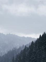 Heavy snow ahead (kle1n) Tags: ngc mountain snow pines carpathian ukraine canon 6d ef 85