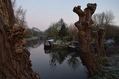 Early Morning at the Moorings (davidvines1) Tags: canal riverstort canalboat narrowboat moorings tree river