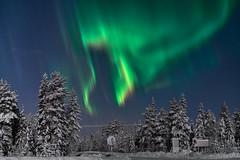 Auroras en Laponia (ZAPIGATA) Tags: auroraboreal northernlights night nightscape noche nieve snow finland landscape laponia zapigata