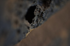 MM - Holes - Brick in the wall (roanfourie) Tags: macromondays holes macro mm nikon d3400 tamron sp af 60mm diii dx raw gimp february 2019 brick grey