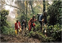 Kilimanjaro, The Rain Forest (channel packet) Tags: tanzania africa kilimanjaro climb hike hikers walkers rainforest travel adventure davidhill