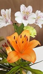 Orange and White Lillies (Gilli8888) Tags: flowers flora lillies lily petals blooms samsung s7 cameraphone galaxy orange alstro alstroemeria asiatic asiaticlily newbigginbythesea newbiggin northumberland macro