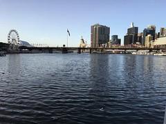 IMG_2237 (dudegeoff) Tags: 20190212syddarlingislandwalk february 2019 sydney nsw australia walks darlingharbour waterviews
