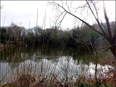 Little Dawley Pools walk with Lizzie 020319©Liz callan (6) (Liz Callan 6 million views) Tags: littledawley littledawleypools water lizzie trees paths lizcallan lizcallanphotograph lizcallanphotography telford shropshire
