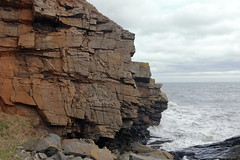 Cliffs,Collieston_Mar 19_446 (Alan Longmuir.) Tags: grampian aberdeenshire collieston cliffs