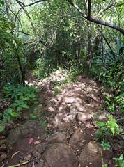 Road to Tamarind Falls / Дорога на водопады Тамаринд (dmilokt) Tags: природа nature пейзаж landscape река river dmilokt